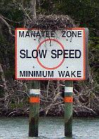 manatees cape coral
