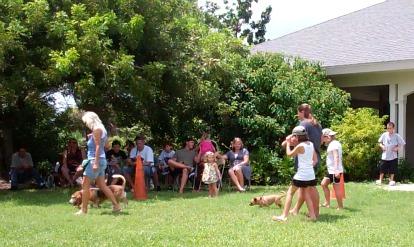 dog events florida