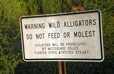 alligator information
