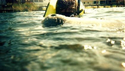 manatees in florida