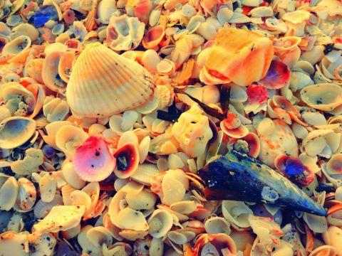 captiva shells