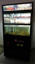 lobster machine