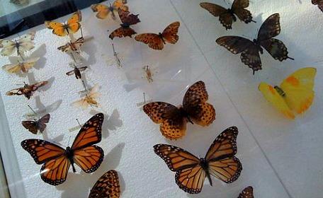 butterfly estates ft myers fl