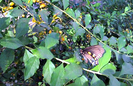 butterfly garden fort myers