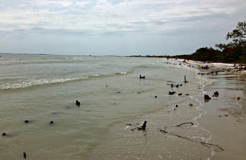 bunche beach