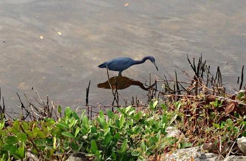 wildlife in florida