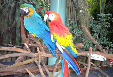 florida zoos