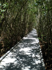 mangrove forest florida