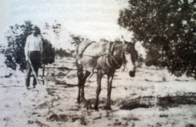 homesteading land