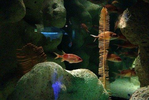 aquarium tampa