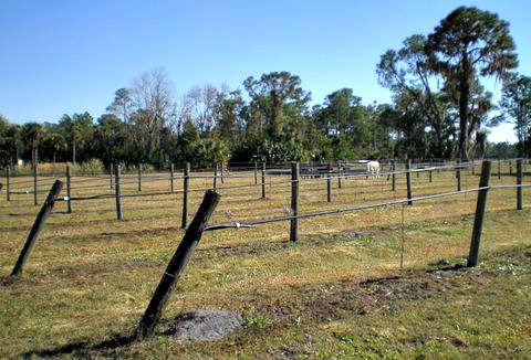 florida vineyards